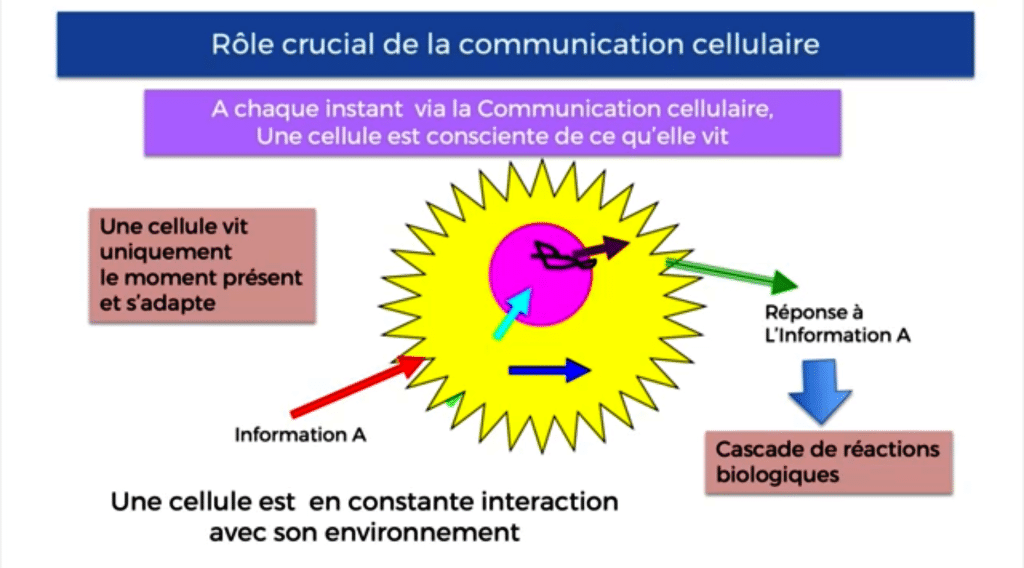 Formation-therapie-quantique-communication-cellulaire-adaptation