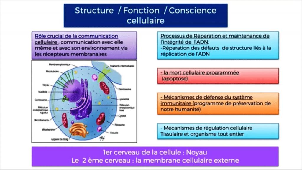 Formation-therapie-quantique-conscience-cellulaire