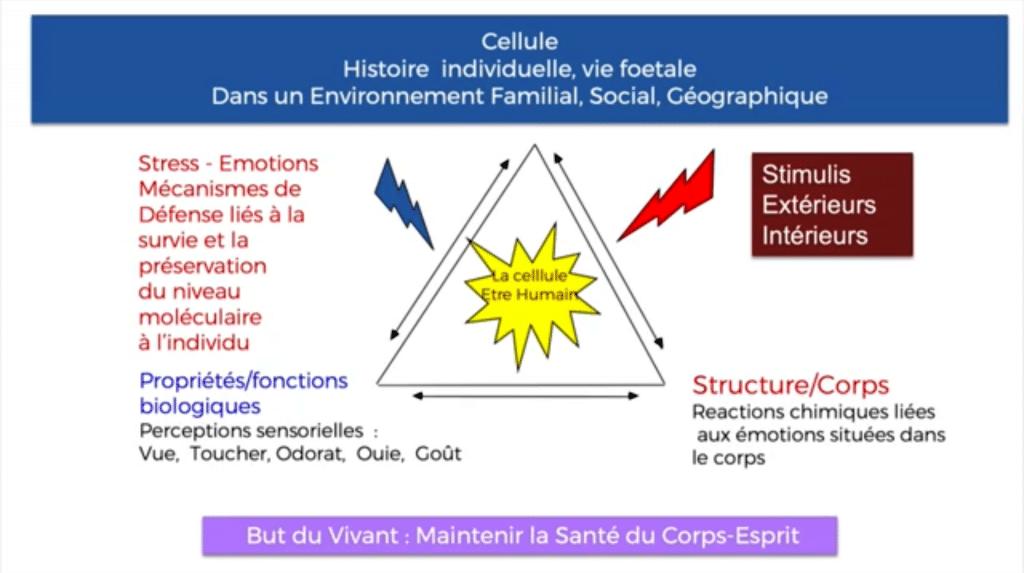 Formation-therapie-quantique-mental-formate-cellule